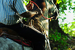 detail ofwrangler on horse, with sun on mane, and hand on guide in rainforest