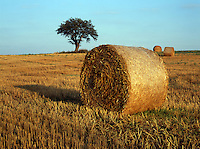 Hay Bales in Field with Tree and Blue Sky in Background
