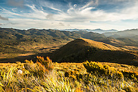 Alpine vegetation at Knuckle Hill with views towards Kahurangi, Nelson Region, West Coast, South Island, New Zealand