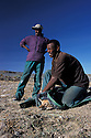 Allo Hussein-Ebyahim Abduke trapping Ethiopian Wolf. Bale mountains. Ethiopia.