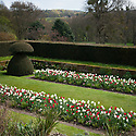Yew topiary and spring bulbs, Hinton Ampner, Hampshire, late April.