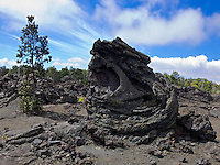 A lava outcrop with a pine tree in Hawai'i Volcanoes National Park, Big Island.