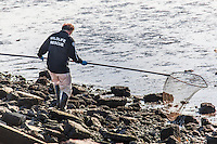 One member of a three person bird rescue team carries a long handled net and carefully negotiates the rugged and rocky Bay shoreline searching for at risk birds, coated in a sticky, still unidentified  substance.
