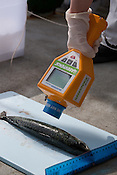 Ike Teuling- radiation safety advisor for Greenpeace International, and Giorgia Monti of Greenpeace Italy, examine fish samples (mackerel fish) on the Greenpeace ship Rainbow Warrior to monitor radiation levels,  as the ships sails up the eastern coast of Japan on her way to Fukushima, in Japan, Tuesday 3rd May 2011..The fish came aboard the Greenpeace ship at coordinates 36' 42.8 North, 141' 07.1 East.