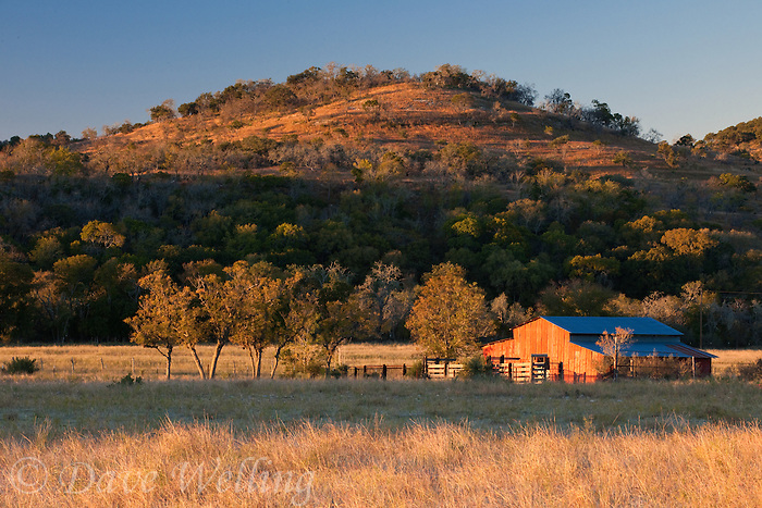 789250138 sunrise lights up a red barn on the laurels hill country ranch owned by dave and myrna langford in central texas united states
