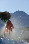A Palmer, Alaska-area farmer washes carrots.