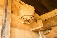 Abandoned hornets' nest (Vespa crabro) in composting toilet. Dorset, UK.
