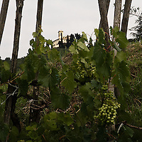 "Vigneti ai piedi della collina di Montevecchia, sullo sfondo il Santuario della Beata Vergine del Monte Carmelo...Vineyards near the Montevecchia hill. Background the sanctuary of ""Beata Vergine del Monte Carmelo"""