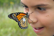 Charlie Ravanelli, 8, of Mequon, looks closely at a Monarch butterfly which was placed on his nose by environmental educator Jayne Henderson at the Riveredge Nature Center in Newburg on Saturday, August 22, 2009. He was a participant in a nature center activity to capture, tag and release the butterflies, which migrate each year to Mexico. Charlie had captured the butterfly, and Henderson placed the tag on the butterflies wing. The insect flew off from Charlie's nose moments later. Ernie Mastroianni photo.