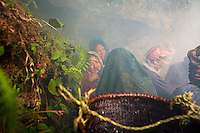 The women, nasal septa decorated with the traditional gold pendant, have come to watch the harvest. Though the Rai divide the majority of the daily tasks between women and men, the honey hunt remains a men-only domain.