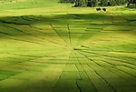 Patterns + Backgrounds