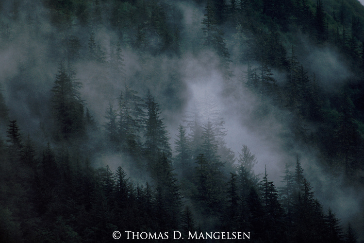 A forest of pine trees is shrouded in fog in an overcast day in Juneau, Alaska.