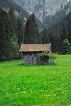 Cattle shed in in spring meadows  Pitztal valley area, Imst district, Tyrol, Austria.