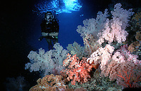 Softcoral Arch Palau