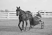 Trainer leaving the track driving in a sulky behind his horse at the Red Mile, Lexington, KY.  Infrared (IR) photograph by fine art photographer Michael Kloth.