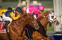HALLANDALE, FL - JANUARY 28: Taghleeb #1, ridden by Tyler Gallalione win the W. L. McKnight Handicap at Gulfstream Park on January 28, 2017 in Hallandale Beach, Florida. (Photo by Zoe Metz/Eclipse Sportswire/Getty Images)