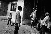Ucea, Transylvania<br /> Romania<br /> April 25, 1992<br /> <br /> Slaughtering sheep