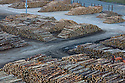Large number of logged trees in Picton Harbor, South Island, New Zealand