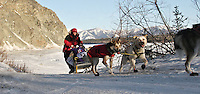 MUSHING ON... Michelle Phillips drives her team off the Yukon river into Eagle, Alaska.