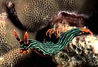 Marine Critters