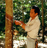 Rubber tapper opens up a groove in a rubber tree to stimulate flow of latex.  Sumatra. Indonesia.