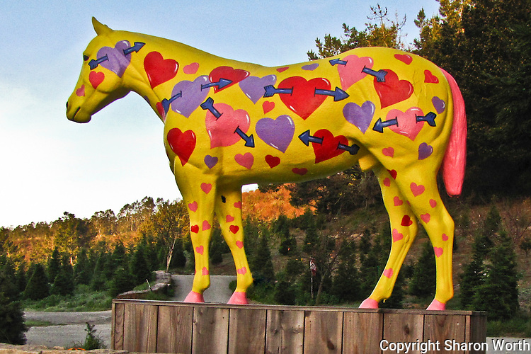 Painted up for Valentine's Day - Lemo's horse, Old Paint, in Half Moon Bay, CA.