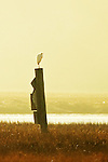 Lonely Vigil, egret waiting for the sun to fall, Back Bay, CA.