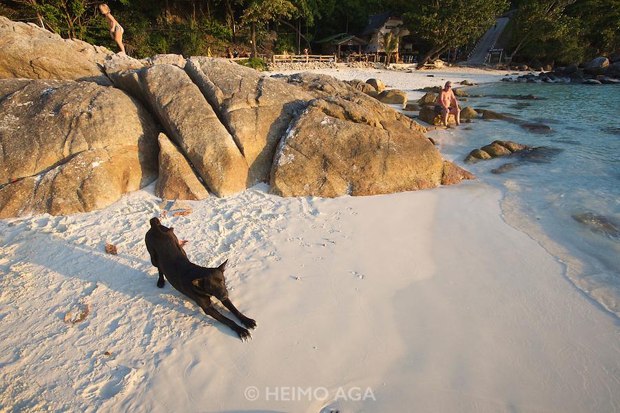 Beach dog and tourist enjoying the sunset.