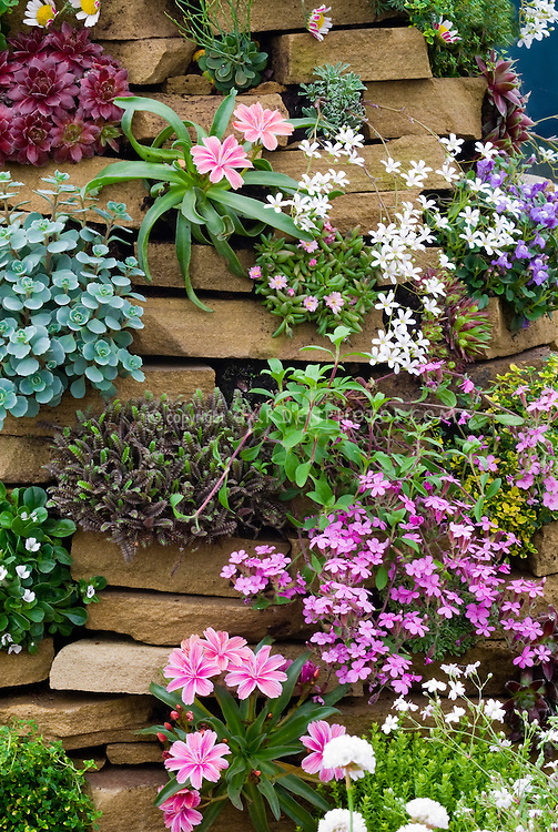 Vertical rock gardening plants in bloom – Rock Garden Plants