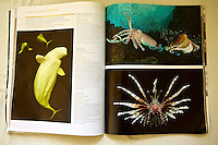 Publication of pharaoh cuttlefish fighting image in Nature's Best Photography. Showcasting winning images of Winland Smith Rice contest.