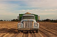 Potato Truck<br /> Riverhead, Long Island