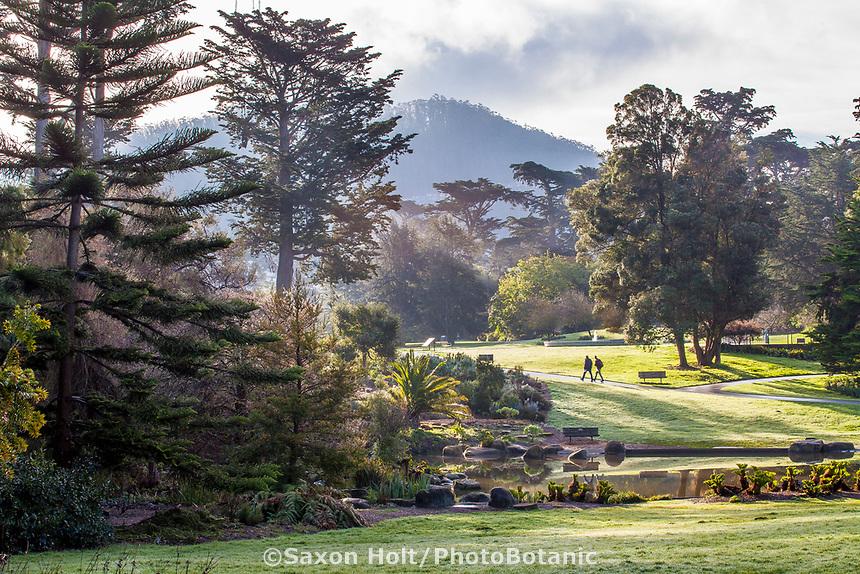 Morning view across McBean Wildfowl Pond in San Francisco Botanical Garden