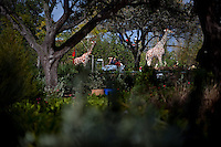 Families ride through the Safari Trek in the new theme park Legoland in Whitehaven, Florida on February 11, 2012.