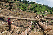 Workers bulldoze bush, and chainsaw operators cross cut felled trees, in the devastated landscape fo the recently felled natural forests, which have become the latest part of the 600+ hectare Laota Plantation, owned by 'New Britain Oil Palm Limited', near Kimbe, West New Britain Island, Papua New Guinea, Wednesday 24th September 2008.