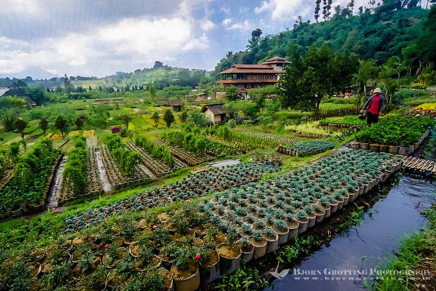 Bandung Indonesia  city pictures gallery : Indonesia, Java, Bandung. Wisata Bunga, the flower road above Bandung.