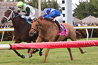 01-14-17 Ft Lauderdale Stakes Gulfstream