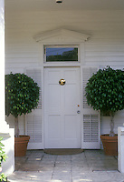 Bay Laurel herb standards in terracotta pots planter containers by front door entry, Laurel nobilis
