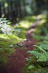 Mossy green woods trail