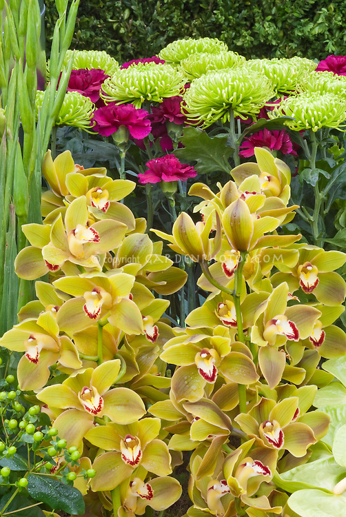 Green & Brown Cymbidium orchids