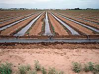 IRRIGATION: PEANUT FARM<br /> in Portales, NM