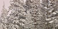 Crystalline Forest