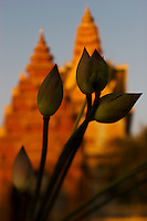 Lotus flowers are seen before a Buddhist temple at sunset in Phnom Penh, Cambodia