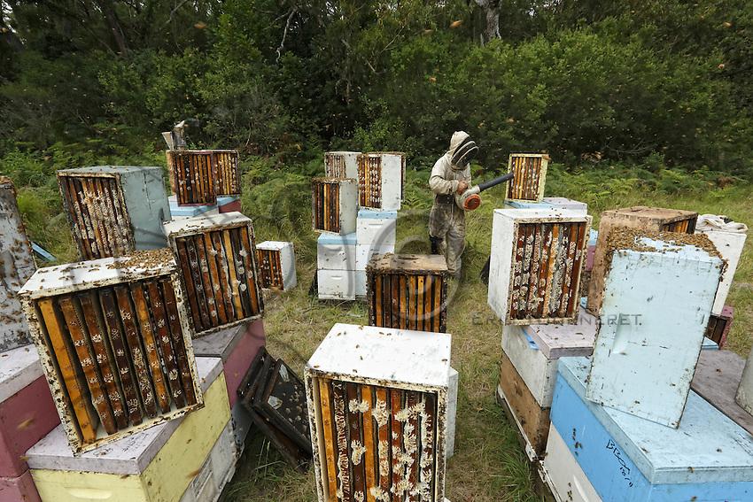 19 The harvest at Ben Brown's apiary. The method is rapid and efficient through the use of a blower. The four-person team harvests several tons of honey within a few hours. The bees don't much appreciate this harvesting method. ///Récolte sur le rucher de Ben Brown. La méthode est rapide, efficace par l'utilisation de souffleur. L'équipe de quatre personnes récolte en quelques heures plusieurs tonnes de miel. Les abeilles apprécient peu ce mode de récolte.