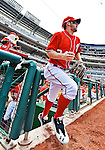 20 May 2012: Washington Nationals outfielder Bryce Harper takes to the field to start play against the Baltimore Orioles at Nationals Park in Washington, DC. The Nationals defeated the Orioles 9-3 to salvage the third game of their 3-game series. Mandatory Credit: Ed Wolfstein Photo