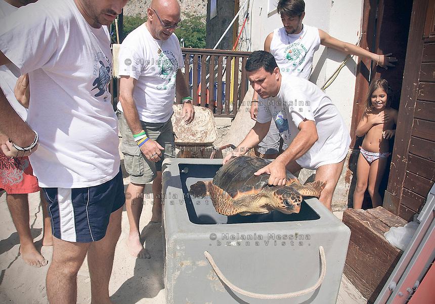 Palermo, volontari del WWF  si accingono a liberare a mare una tartaruga caretta caretta, dopo averla curata.<br /> Palermo, WWF volunteers are going to free a loggerhead  turtle, after having cured.