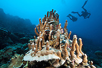 A bizarre coral formation with fantastic little spires, with divers in the background, Palau Micronesia. (Photo by Matt Considine - Images of Asia Collection)