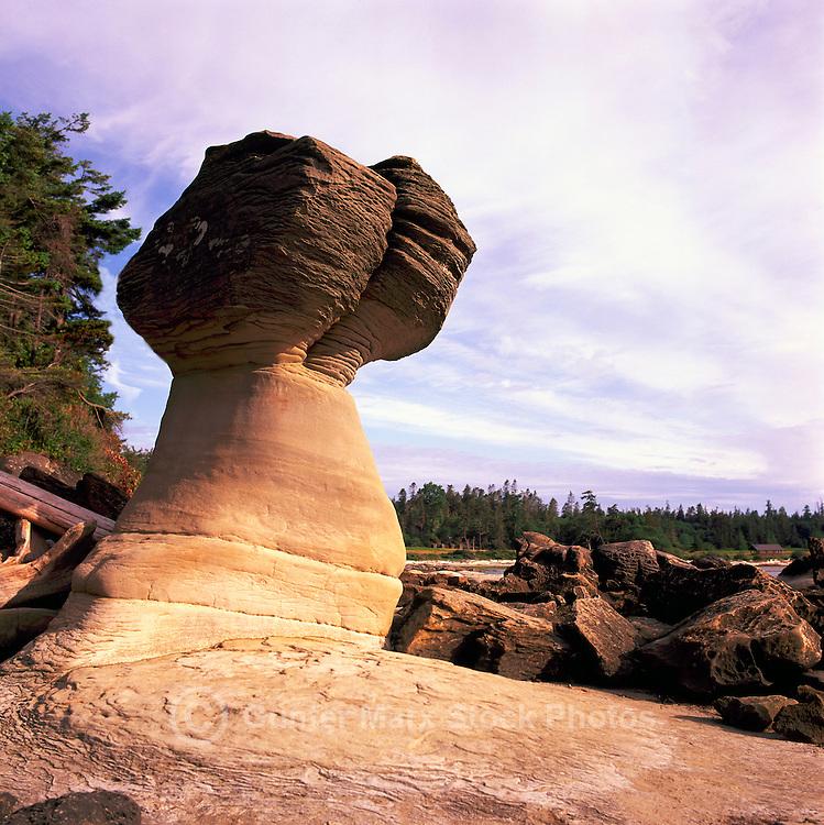 Hornby Island, Northern Gulf Islands, BC, British Columbia, Canada - Unusual Sandstone Rock Formations along Coastline at Tribune Bay Provincial Park