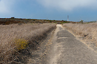 The trail heading inland from the parking lot is wide and easy to follow.  It leads through coastal sage scrub habitat, so don't expect east-coast foliage.  Here the fog is rolling in, so whisps of it are visible against the blue sky.