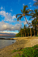 A green sea turtle (or honu) rests near naupaka on a quiet sandy beach in Puako, South Kohala, Big Island.