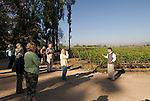 Chile Wine Country: Tour at Undurraga Winery, Vina Undurraga, near Santiago..Photo #: ch416-33885.Photo copyright Lee Foster, 510-549-2202, www.fostertravel.com, lee@fostertravel.com.